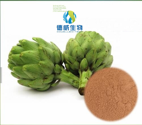 Hot Sale Natural Artichoke Extract