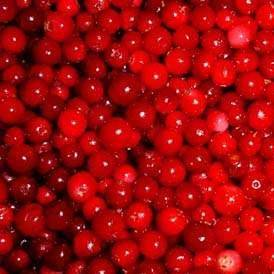 Lingonberry Extract, Lingonberry Red (sales2 at lgberry dot com dot cn)