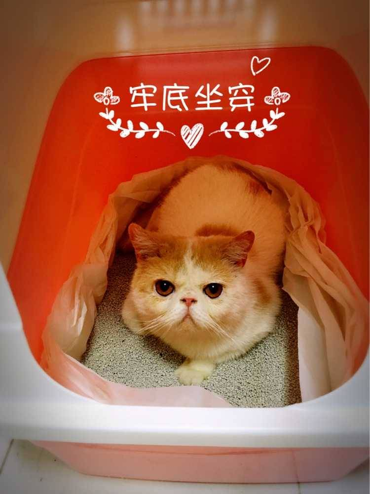 Manufacturer Offer Lowest Price Cat Litter Bentonite Clay