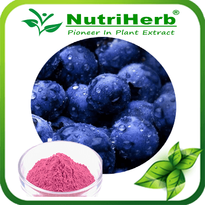 Natural Instant Freeze Dried Wild Blueberry Powder/Blueberry Fruit Powder/Blueberry Extract Powder