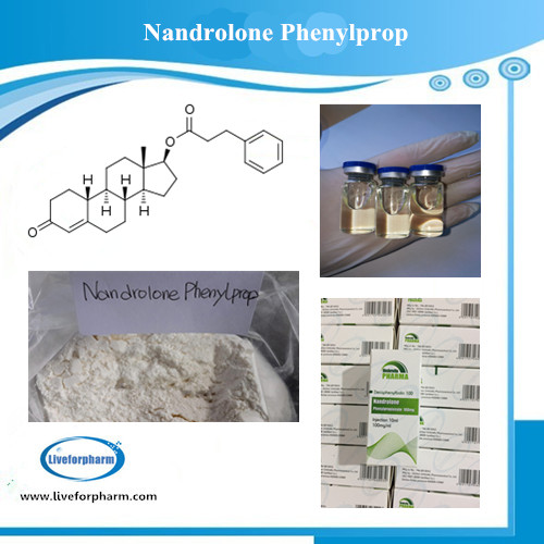 NANDROLONE SERIES Nandrolone Phenylpropionate CAS 62-90-8 98.8 % above purity
