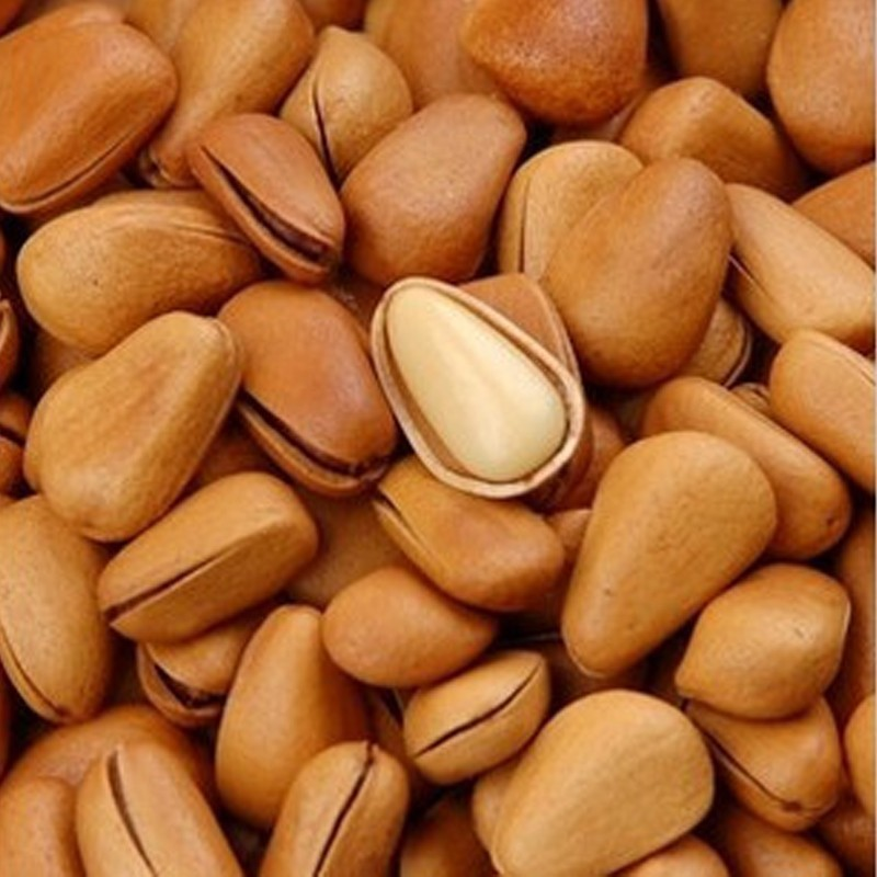 High Quality Raw Pine Nuts / Raw Pine Nuts in Shell / Organic Pine Nuts