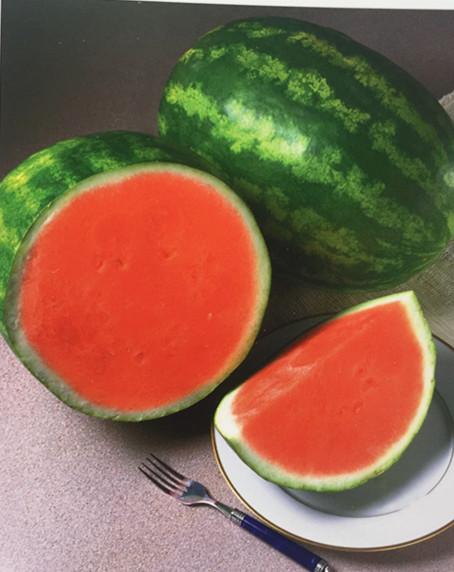 RF Tough rind oval shape hybrid f1 watermelon seeds