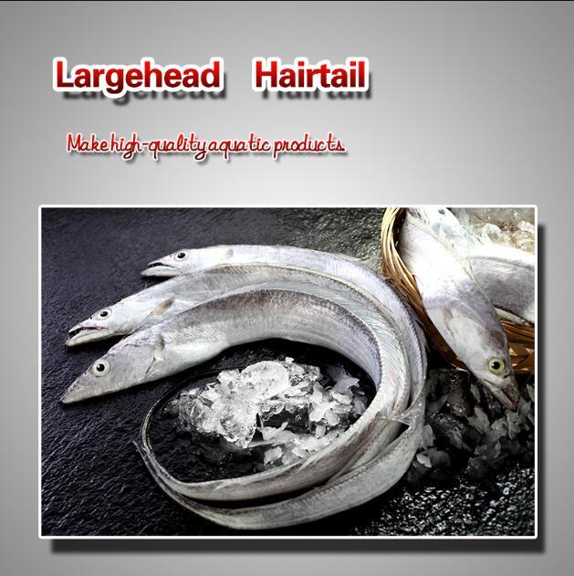 Largehead Hairtail