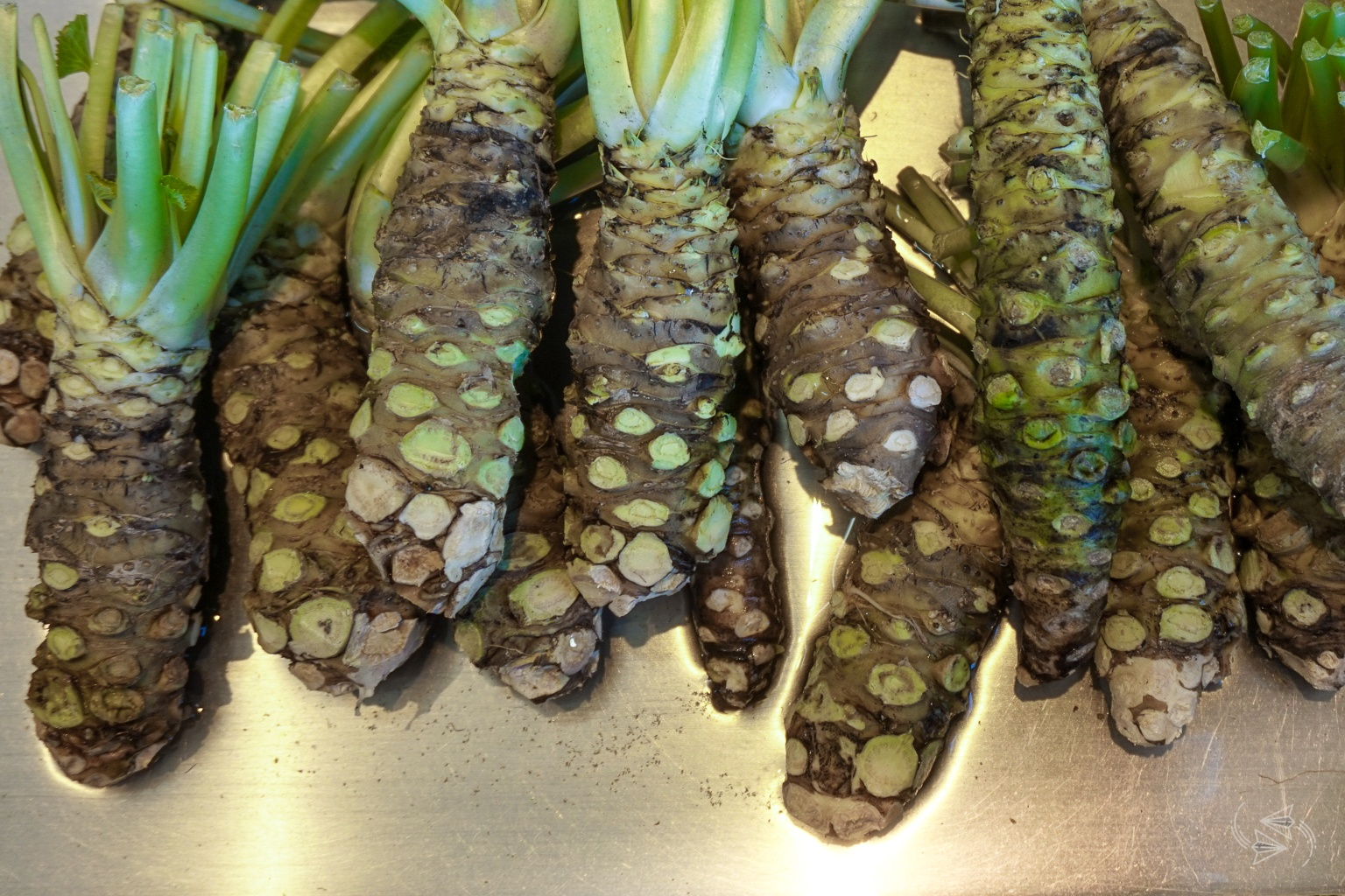 Wasabi Roots For Sale