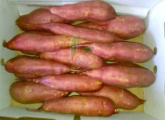 fresh Sweet Potatoes by Fruit Link