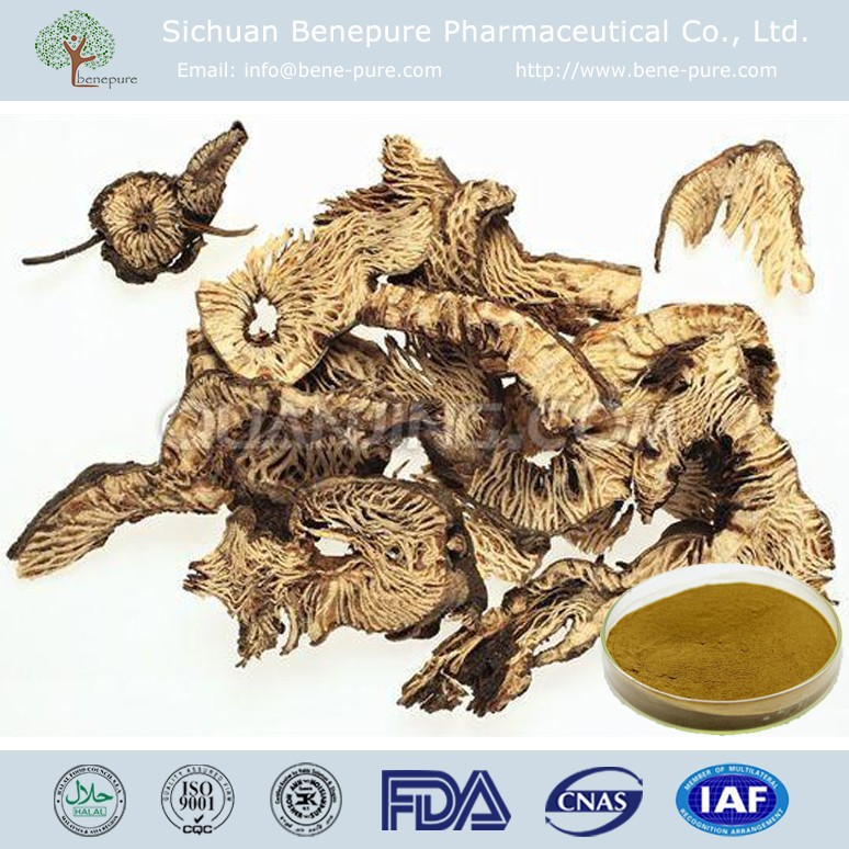 Natural Black Cohosh Extract with Triterpene Glycosides,BENEPURE