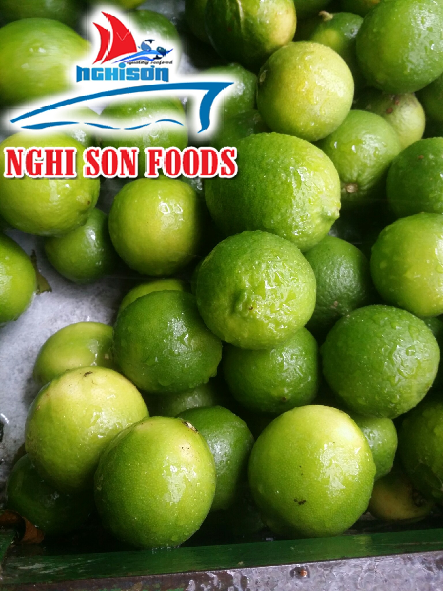 Seedless Lime From Vietnam (0084 90 5 179759)