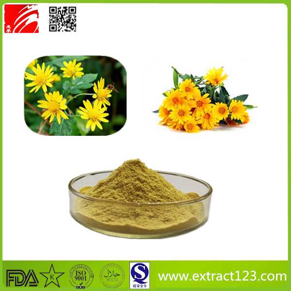 High Quality Chrysanthemum Extract