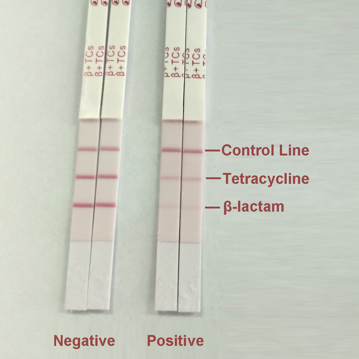Beta-lactam & Tetracycline Combo Test Kit