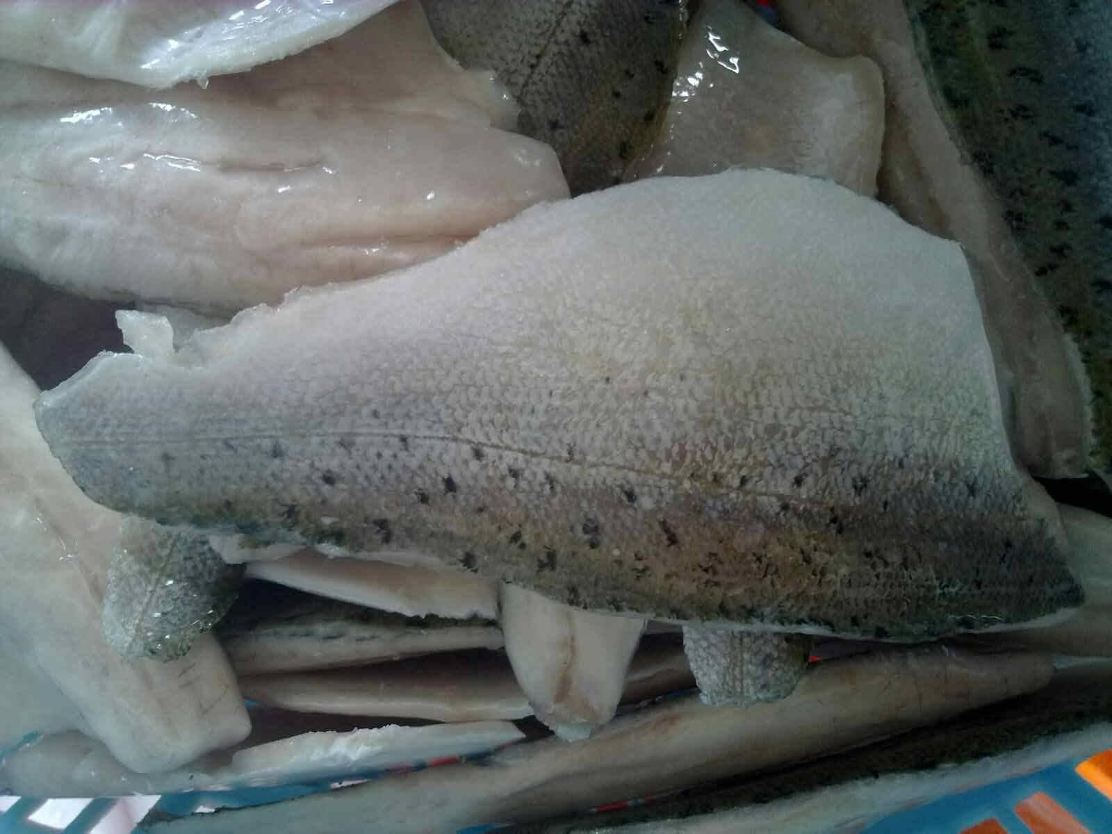 Frozen Sea Bass Fillet