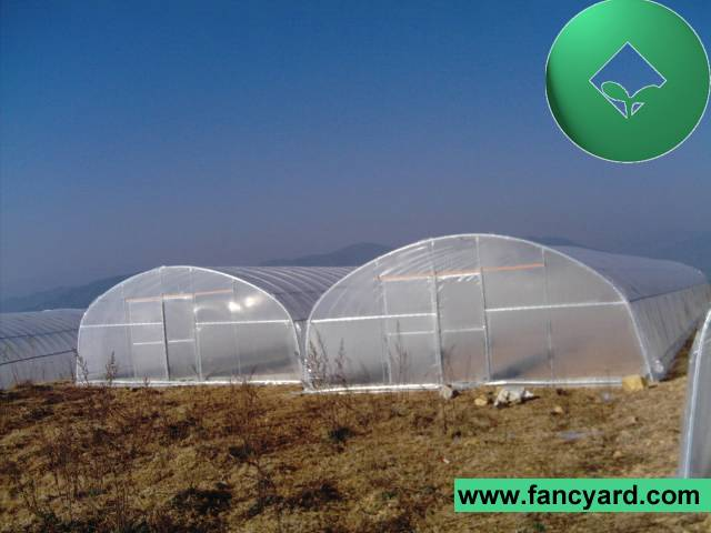 house house green economical plastic tunnel greenhouse - Commercial Greenhouse Kits