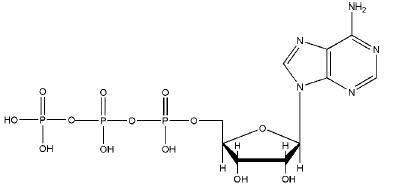 Adenosine Triphosphate CAS:56-65-5