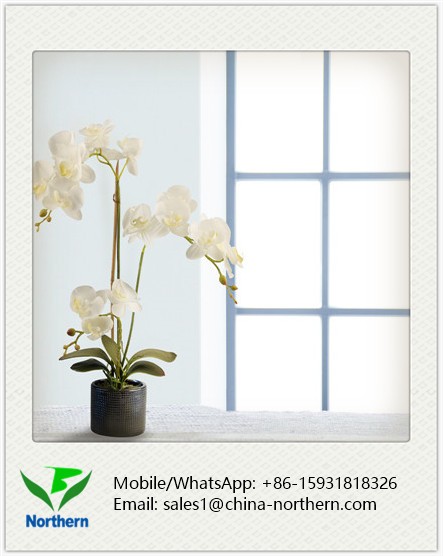 White Soft Touch Artificial Orchid Decor