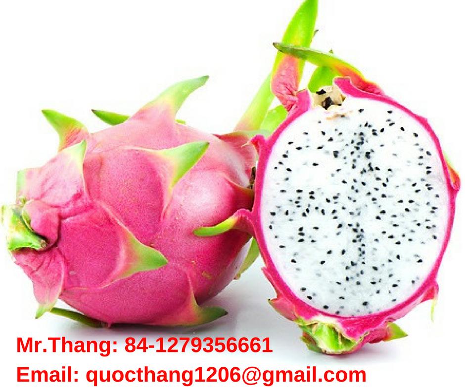100% Fresh Dragon Fruit from VIETNAM