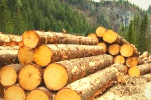 A grade Timber