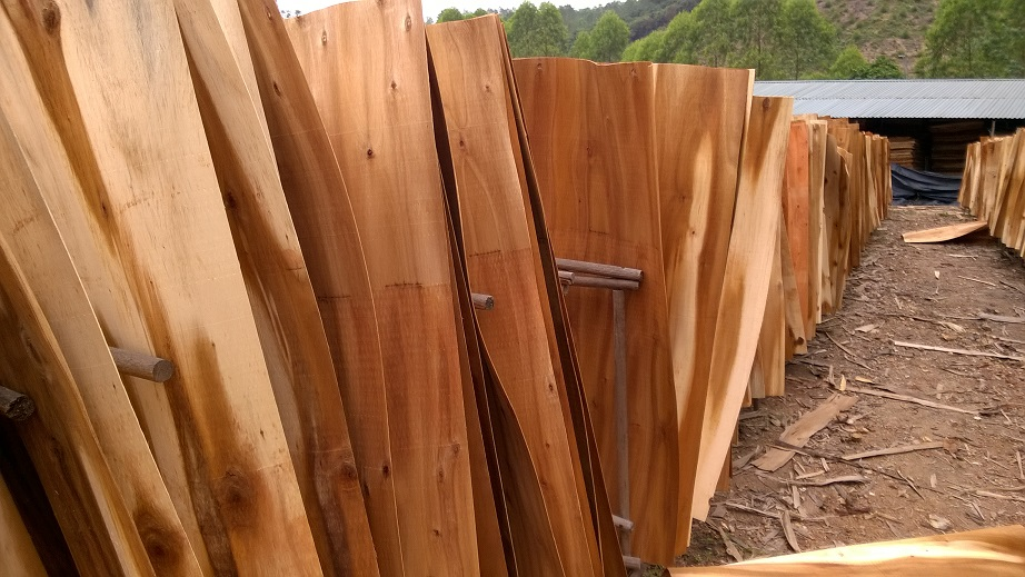 A Grade Acacia Core Veneer for Manufacturing Plywood