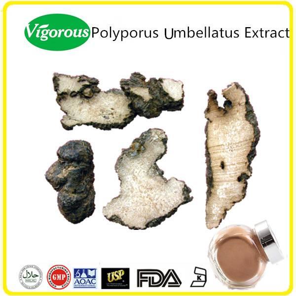 GMP manufacturer 30%Polysaccharides Natural Polyporus Umbellatus Extract