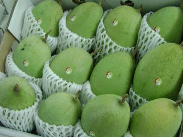 fresh mangoes fruit
