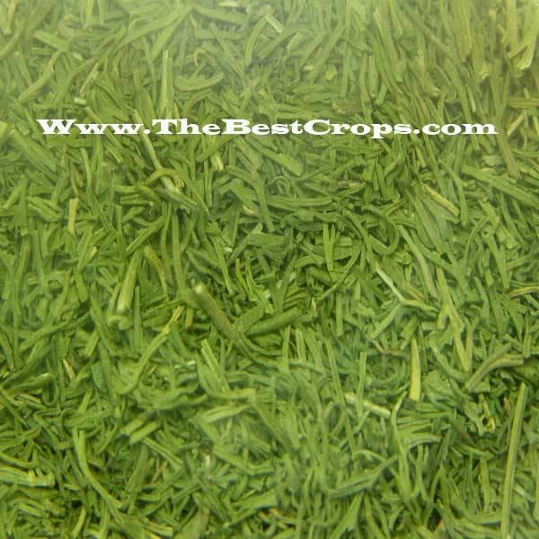 Herbal tea, Top Grade from Iran