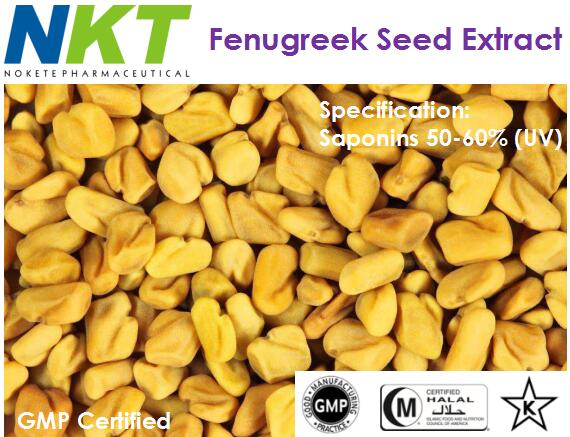 Fenugreek Seed Extract (GMP Certified)