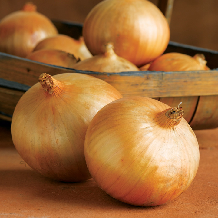 Round fresh red onions fresh cheap onion