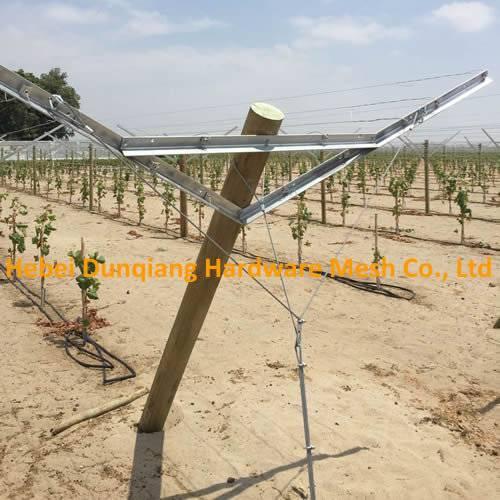 Open Gable Trellis System for Vineyard