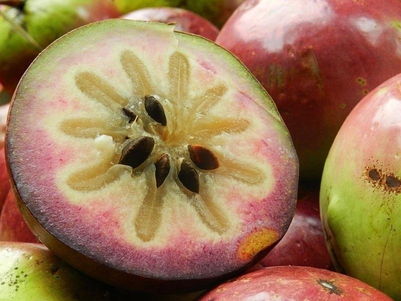 Milk Fruit/ Star Apple/ Caimito/Breast Fruit Milk