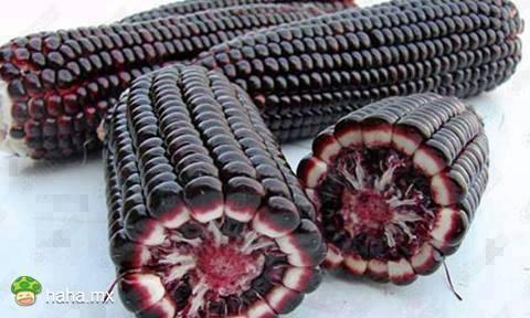purple corn extract