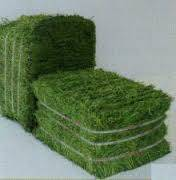 supply high quality Animal feed alfalfa / alfalfa hay for sale