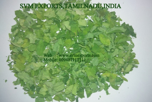 Moringa Oleifera Dry Leaves Exporters India