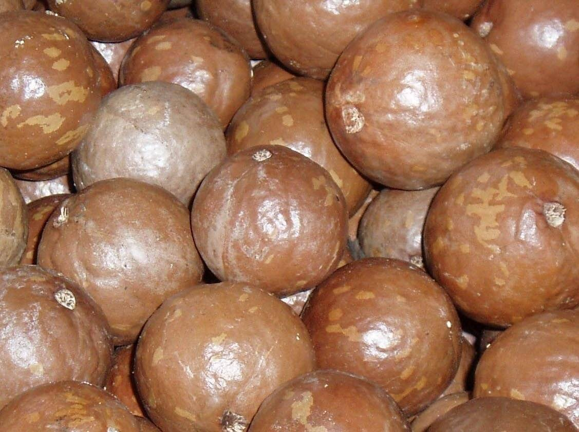 Macadamia nuts in shell, hot sell products