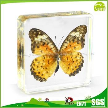 Benji Leopard Butterfly Specimens for Education