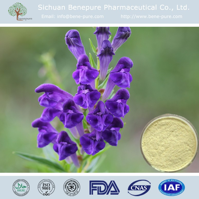 Natural Scutellaria Baicalensis Extract Powder Baicalin CAS 21967-41-9
