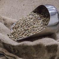 Arabica Coffee Beans,Black Bean,Robusta Coffee Beans,Cocoa Bean,Canned Beans,Chickpeas,Green Peas,Bu