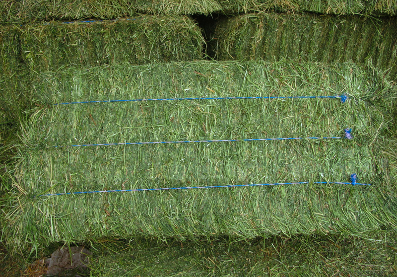 Quality Alfalfa Hay / Alfalfa Hay Pellets / Wheat bran pellets
