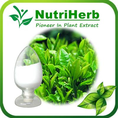Natural Green Tea Extract 98% L-theanine suntheanine