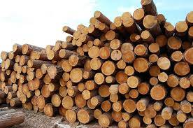 SPRUCE wood rounded timber