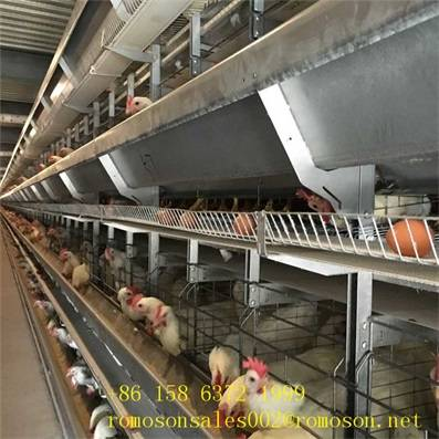 cages for poultry_shandong tobetter Professional installation team