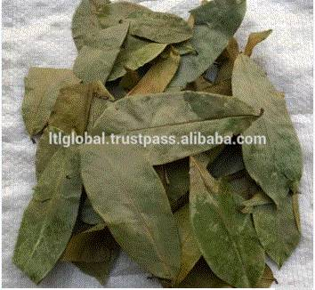 Sun- Dried Soursop Leaves