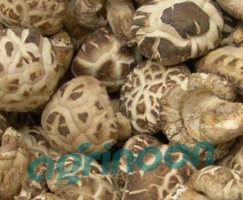 dired shiitake mushroom