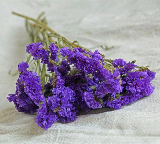 Preserved flower sea lavender forget me not