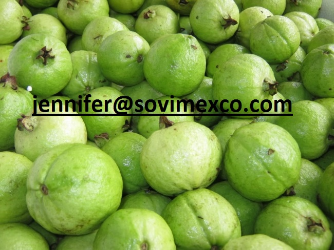 Vietnam Fresh Guava