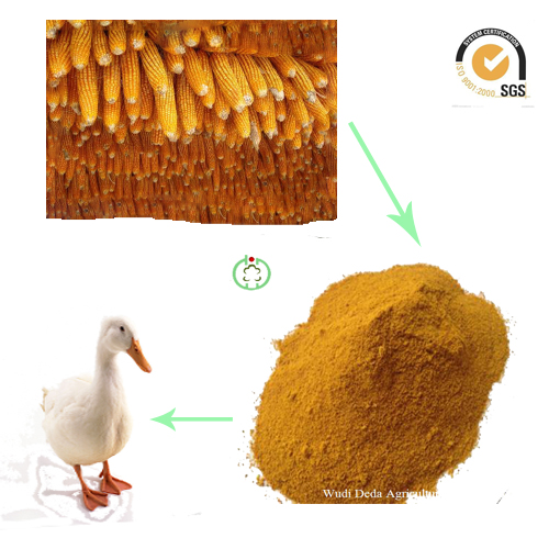 corn glutrn meal animal feed