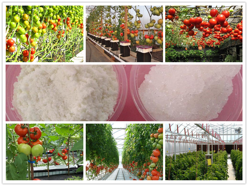 hydroponic fertilizer nutrient soiless