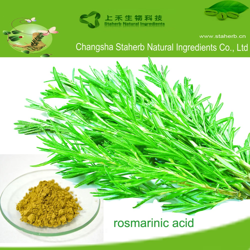 Concentrated plant extract Rosmarinic acid 5%-95%,rosemary extract