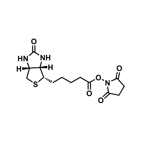 (+)-Biotin-NHS Ester;(+)-Biotin N-hydroxysuccinimide ester;CAS#35013-72-0