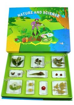 Educational Toys for Children Learning Equipment with Autism Poisonous Plants Specimen