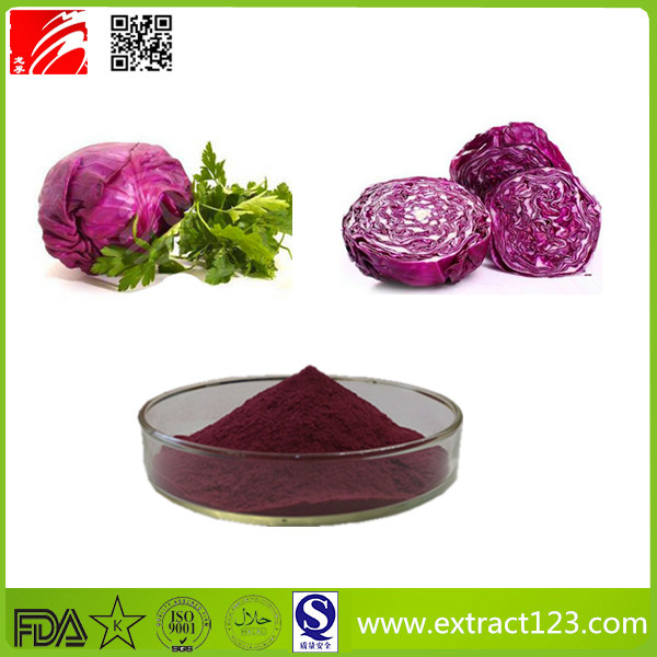High Quality Red Cabbage Powder