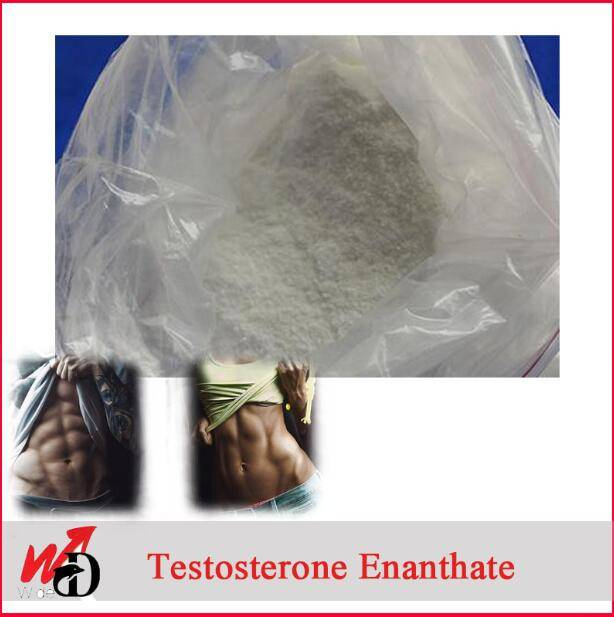 Bodybuilding Chemical Steroid Powder Hormone Cas 315-37-7 Testosterone Enanthate